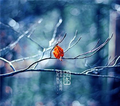 穿过寒冬,春天在等着你